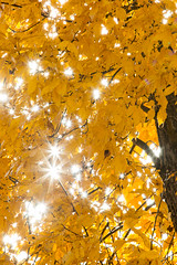 Small-8571 (kayaker72) Tags: fallfoliage fallcolors foliage newhampshire sunburst
