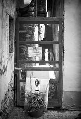 Memory dump (attilio.pirino) Tags: dump memories photo dry plant bw rifiuti ricordi foto secco pianta bn gate cancello