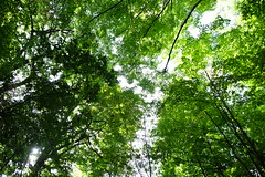 Trees II (catfacelol) Tags: tree light sun leaves green shade shades sky beautiful sunny canopy outdoor plant photosynthesis happiness sunlight trees
