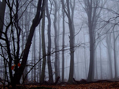 Enchanted forest (eyeemudo) Tags: trees fog leaves hazy unreal dimly shadowy autumn tranquilscene calm cloudyforest foliage haze nopeople wet branches germany