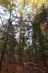 Troodos Geopark (46) (Polis Poliviou) Tags: polispoliviou polis poliviou   cyprus cyprustheallyearroundisland cyprusinyourheart yearroundisland zypern republicofcyprus  cipro  chypre   chipir chipre  kipras ciprus cypr  cypern kypr  sayprus kypros polispoliviou2016 troodosgeopark troodos mediterranean nicosia valley life nature forest historical park trekking hiking winter walking pine pines prodromos limassol paphos fall autumn geopark kakopetria