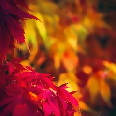Autumn mosiac (10000 wishes) Tags: fall autumn beautiful colourful color leaves nature naturephotography vibrant season