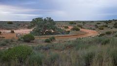 _DSC9329 (slackest2) Tags: lone gum tree simpson desert coolaba rig road track outback bush donga