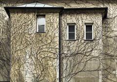 Ein Schloss im Dornröschenschlaf (Ernst_P.) Tags: aut altstadt haus herrengasse innsbruck kletterpflanze mauer pflanze tirol österreich austria autriche tyrol samyang walimex f20 135mm g