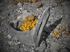 Driftwood (virgil martin) Tags: driftwood peterlougheedprovincialpark alberta canada panasoniclumixfz1000 oloneo gimp