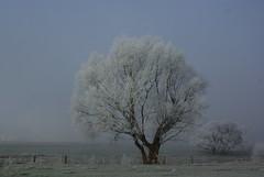 Frost (ute_hartmann) Tags: baum tree nebel weser weserbergland lippoldsberg