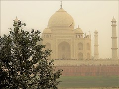 Taj mahal from the back (bearlike1) Tags: india indian agra taj mahal new delhi building monument famous marble awesome amazing wonderful tomb