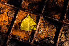 (paulo_m_gonalves) Tags: fall water antique bright brown contrast dark day dead decadent decay dirty frame grid iron leaves light metallic nature old outdoor plants rain rust shadow trees underwater vintage winter