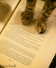 The new Don (lady_blue_andorra) Tags: cat cute book thelastdon canon50d canon1785mm books paw text letters animal