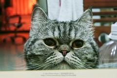 DSC_7574 (archiwu945) Tags: china cat kaohsiung   nikon1 nikon1j2