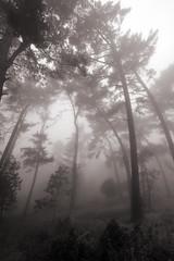 Redwood Regional Park (eks4003) Tags: dailyrayofhope2013