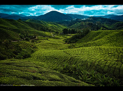 A Breath of Fresh Air in the Cameron Highlands, Malaysia