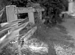 Lake Worth Alley (leicaflex sl, 60mm elmarit) (PositiveAboutNegatives) Tags: leica blackandwhite dog film analog lab labrador yellowlab backalley florida kodak sl 60mm leicaflex plusx 125px elmarit leitz lakeworth vintageslr colorneg 11212 vuescan leicar leicaflexsl nikon9000scanner blackandwhitefilmphotography 60mmelmarit leicafilmphotography freefilmimages freefilmpictures