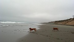 7/18/2013: Fort Funston, San Francisco CA (Play and Paws) Tags: dog dogs sfbayarea dogpack dogplay dogwalk sfpeninsula dogwalker doggydaycare petcare dogfriends doghike dogpals doggyadventures playandpaws doghiker dogpros doggyoutings dogpro