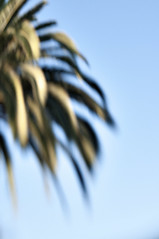 (jhudgens) Tags: abstract palmtree bluronpurpose lensbabymuse
