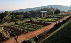 veggie garden @Monticello