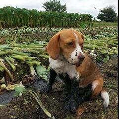 """""""หนูซนไปหน่อย"""" ภาพน่ารักๆของน้องไข่ดาว จากการอัดรายการ Foodwork ค่ะ #Foodwork #ThaiPBS #instamood #instadog #instapet #thaistagram"""