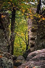Fall is Approaching (Umbrelika) Tags: autumn camp cliff mountain tree fall colors leaves forest umbrella studio season leaf woods rocks mt hike steeple poles blaze bianca umbrelika