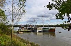 Novemberstimmung am Rhein (mama knipst!) Tags: november boot cologne kln rhine rhein