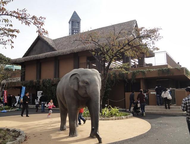 日本最大級のゾウ舎「ゾージアム」へ|名古屋市東山動植物園