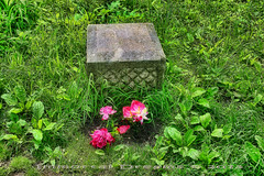 Damaged (Immortal Dreams) Tags: white cemetery graveyard lady forest illinois moss pond woods grove madonna headstone father ghost lagoon haunted bachelor dreams turnpike fulton immortal preserve vandals bachelors mendenhall capone rubio midlothian batchelor foskett bacheldor