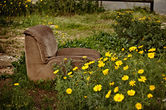 abandoned in flowers (Tania's Tales) Tags: street city flowers urban stilllife abandoned grass yellow outside chair furniture empty streetphotography armchair exploration          fotografiastradale taniastales   taniastalescitystreetstreetphotographyurbanexplorationfotografiastradale taniastalescitystreetstreetphotographyurbanexploration chairarmchairfurniturestilllifeoutsideemptyabandoned