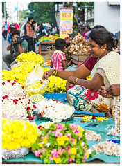 "Flowers for Sale • <a style=""font-size:0.8em;"" href=""http://www.flickr.com/photos/53502454@N07/11167980685/"" target=""_blank"">View on Flickr</a>"