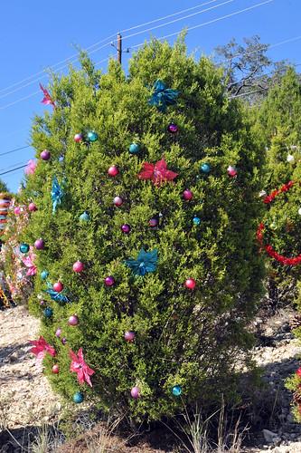 Trees_of_Loop_360_2013_174