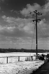 Last Winter. (Coldkennels) Tags: zorki blackandwhite snow rangefinder 1200 hp5 jupiter12 f11 homedeveloped lc29