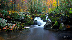 Tremont Cascade near Trestle Bridge (Ron Harbin Photography) Tags: autumn mountains color fall abandoned nature water leaves waterfall moss rocks stream long exposure postcard logging smoky cascade smokies tremont gsmnp