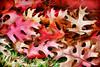 Autumn - the Fallen (Jeff Clow) Tags: autumn fall nature leaves dallas texas seasons photoart digitalartwork ©jeffrclow