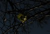//*// (*F~) Tags: blue light tree green nature hope seasons darkness time