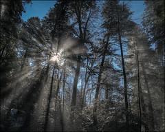 Winter Sun (helikesto-rec) Tags: trees winter sun snow hdr