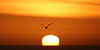The rising day (Anthony Goodall) Tags: uk winter sky sun sunlight bird water sunshine silhouette sunrise seaside wings seagull scarborough northyorkshire tamron70300mm canoneos550d mygearandme mygearandmepremium anthonygoodall flickrstruereflection1 flickrstruereflection2 miracleconspiracy