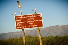 Morning on the Lake 9 (Mariasme) Tags: seagulls sign myanmar inlelake gamewinner favescontestwinner