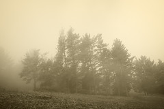 trees with fog (Mimadeo) Tags: park morning trees light sky blackandwhite white mist black cold tree nature wet field grass weather silhouette misty fog sepia rural forest vintage landscape evening countryside haze solitude mood moody sad cloudy branches foggy atmosphere nobody retro filter silence trunk melancholy hazy desolate effect melancholia instagram