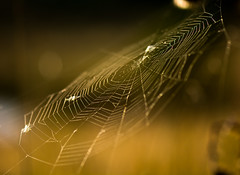Backlit Cobweb (Peter Quinn1) Tags: cobweb bigmoor backlit backlighting