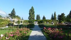 Rosengarten auf der Insel Mainau
