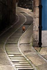 Cat Down (cangus) Tags: cudillero asturias spain color street animal