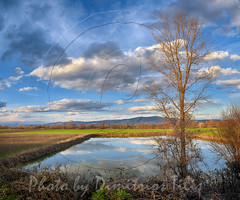 Sky collector (Dimitil) Tags: clouds nuages landscape sky reflections trees provence country rural ruralscenes thessaly trikala greece hellas water