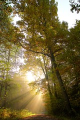 morning light (Tim Hsselbarth) Tags: leica q laub sonne bume trees wald herbst fall forest