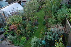 Looking Down on the Back Garden - October 2016 (basswulf) Tags: backgarden polytunnel d40 1855mmf3556g lenstagged unmodified 32 image:ratio=32 permissions:licence=c 20161005 201610 3008x2000 lookingdownonthegarden garden normcres oxford england uk