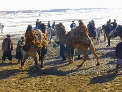 DSCN1548 (Vearalden) Tags: afghanistan mazare sharif northern alliance daryae suf camel wrestling kholm kunduz