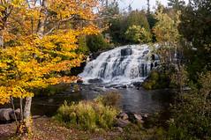 Bond Falls (nikons4me) Tags: michigan mi up upperpeninsula fallcolor autumn nikond300 waterfalls bondfalls sigmaaf1850mmf3556dc