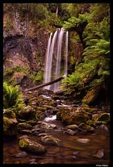 Otway waterfall (Dan Wiklund) Tags: otway nationalpark greatoceanroad victoria australia landscape waterfall stream forest ferns d800 2016 nature