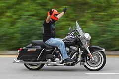 Harley Davidson, Road King, Hong Kong (Daryl Chapman Photography) Tags: harleydavidson motorbike motorcycle american pan panning kaitak darylchapman darylchapmanphotography canon 1d mkiv 70200l is ii f28