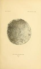 n228_w1150 (BioDivLibrary) Tags: antiquities indianart indians shellsinart smithsonianlibraries bhl:page=11258829 dc:identifier=httpbiodiversitylibraryorgpage11258829 manyhatsofholmes taxonomy artist:name=katecliftonosgood