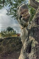 Horse laugh (tmeallen) Tags: horse laugh bigteeth funshot tree halter whitehorse ajijic jalisco lakechapala mexico