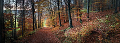 Bannwald November explored (Bilderschreiber) Tags: herbst autumn harvest wald laub wood leafs bavaria bayern landscape landschaft way weg bannwald seasons jahreszeiten