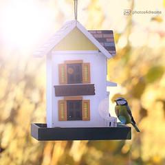 new mobile home (photos4dreams) Tags: newmobilehomep4d vogelhaus vogel bird birdy meise birdhome herbst autumn photos4dreams p4d photos4dreamz